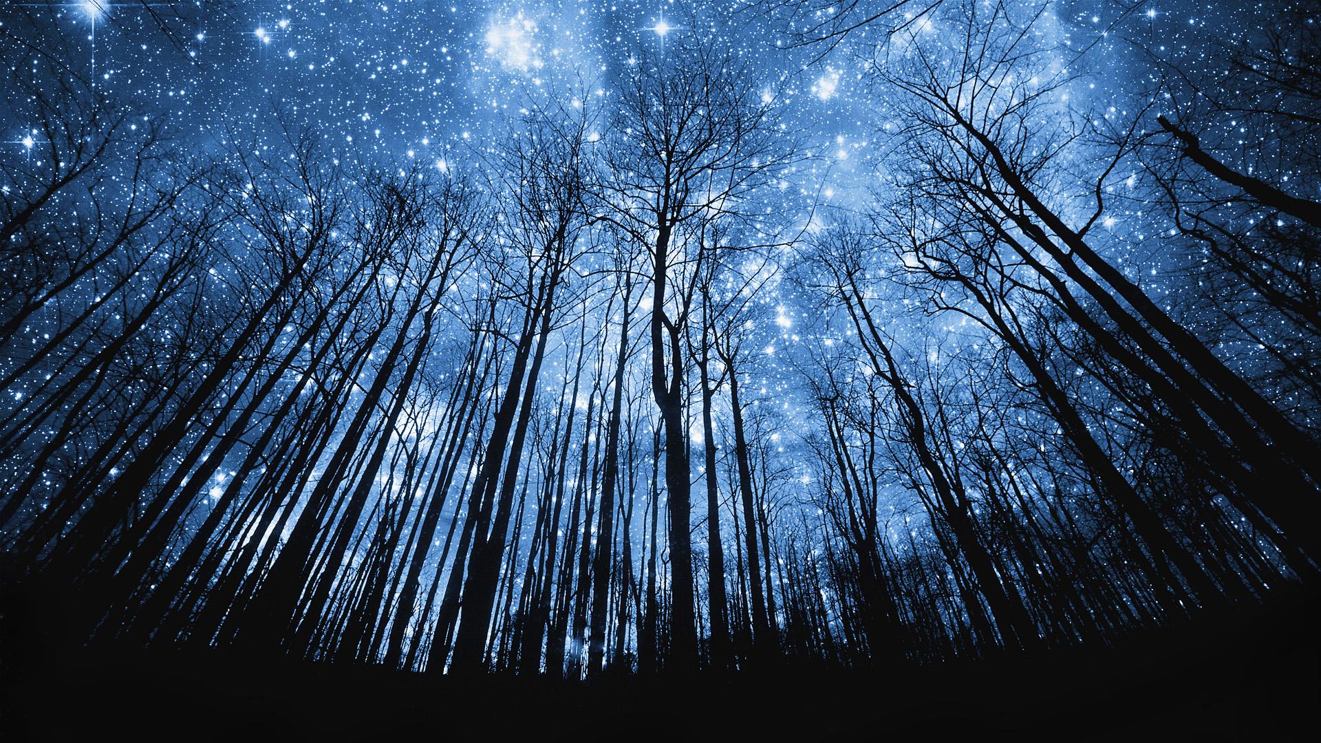 метеорит поле дерево дети  № 1801994  скачать